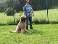 Rally Obedience Gruppe 2